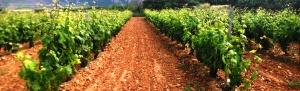 Rutas del Vino en redes sociales
