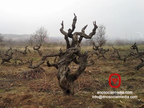 Visitar viñedo en Enoturismo