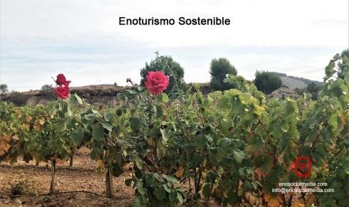 Enoturismo: viña con rosales